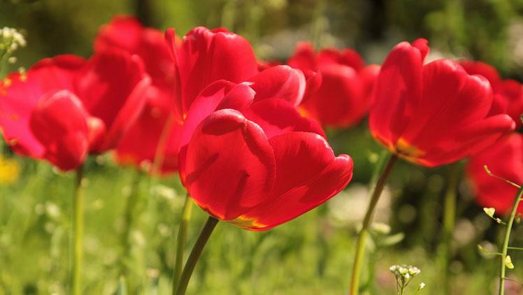 flower-722791_1920-748x422