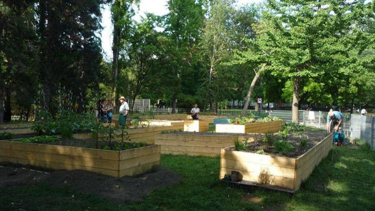 Közösségi kert (Copyright: MA42)